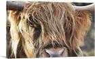 ARTCANVAS Highland Cow Cattle Closeup Canvas Art Print