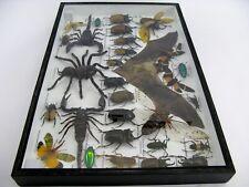 Echte exotische Insekten - Vogelspinne - Skorpion - Fledermaus XXL in 3D Neu  07