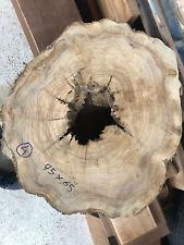 Legno ulivo secolare tronco bucato
