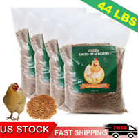Chicken Treats Dried Mealworms for chickens Duck Feed 44lbs Organic Meal Worms