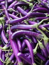 Aubergine Long Purple Violetta Lunga lange schlanke Früchte bis zu 25cm