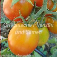 🔥 🍅 Jaune Flammee Tomate orange/gelbe Kirsch-Tomaten 10 frische Samen Balkon