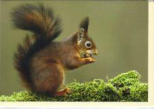 Cartolina d'auguri: COSÌ MIR schmeckt ESSO scoiattolo con NOCE - DE LUXE