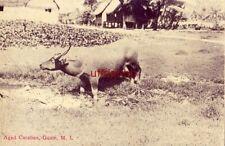 GUAM, M.I. MARIANA ISLANDS AGED CARABAO