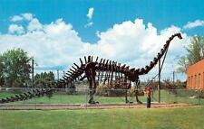 Vernal, Ut Utah Diplodocus (Dinosaur) Replica c1950's Postcard