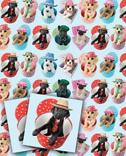 Dog Gift Wrap Pack 2 Sheets 2 Tags Mad Hatters Funny Birthday Wrapping Paper NEW