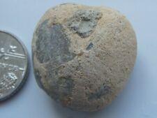 fossil echinoid Jurassic Dorset Nucleolites