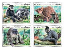 Angola 2018 fauna  Primates monkeys S201902