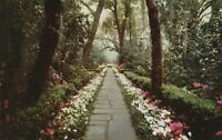 *(Q)  Mobile, AL - Bellingrath Gardens - Scenic View of Pathway Through Gardens