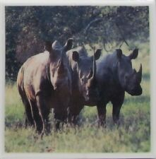 Personalized Natural Stone Ceramic Tile Drink Coasters - Set of 4 - Rhino 4 B