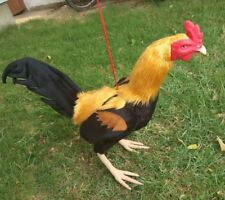 new!! Real Rubber 3D Chicken fighter Rooster Pigeon Gamecock เหลืองแจ้