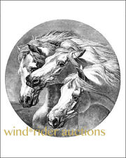 "PHAROAH'S HORSES - Arabian horse black and white ART print 8"" x 10"" -  BEAUTIFUL"