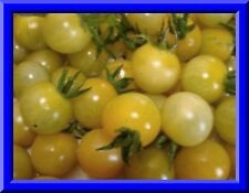 Champagne Cherry Tomato! 20 SEEDS! Fruit grows in clusters like grapes! COMB S/H