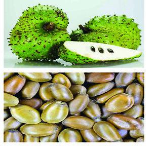 Annona Muricata Seeds (Guanabana, Soursop, Graviola) Seeds  free shipping