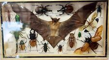 REAL EXOTIC BAT COLLECTION SPIDER SCORPION BUG INSECTS DISPLAY TAXIDERMY FRAME 1