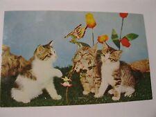 Postcard Kittens Tulips Cat 1966 Canada Three Little Butterfly Flowers Vintage
