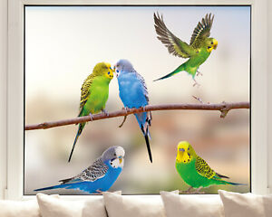 Hochwertige Fenstersticker Wellensittiche Vögel Haustiere - Made in Germany -