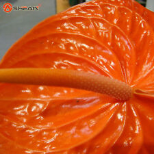 AA 100 orange Anthurium Seeds Indoor Potted Hydroponic Flowers Plant Seeds