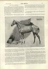 1893 Cecil Aldin Marcion Winner Gold Cup Ascot arnaqueuse