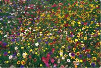 wildflower mix, 100% seed, wild flower, 2000 SEEDS! GroCo BUY US USA
