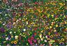 wildflower mix, 100% seed, wild flower, 2000 SEEDS! GroCo