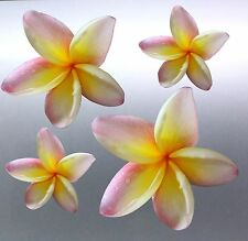 4 x frangipani Sticker vinyl cut pink and yellow colour local photo australian