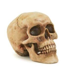 Human SKULL REALISTIC REPLICA Statue Props Skeleton HALLOWEEN Spooky Decoration