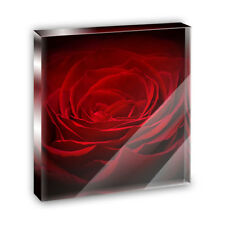 Red Rose Closeup Flower Petals Acrylic Office Mini Desk Plaque Paperweight
