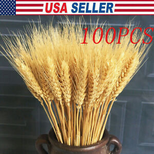 100PCS Natural Dried Wheat Reed Bunch Flower Wedding Home Bouquet Plant Decor US