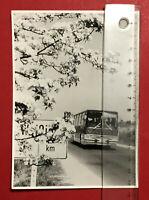 altes Foto Weissig bei Dresden um 1970 IKARUS Bus  ( 66253