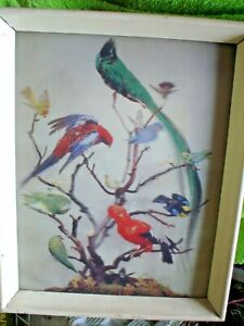 1 x  BIRDS ON A TREE FRAMED PICTURE 37 X 3O CM