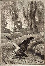 EAU FORTE / Fables de la Fontaine 1883 / LE MILAN ET LE ROSSIGNOL