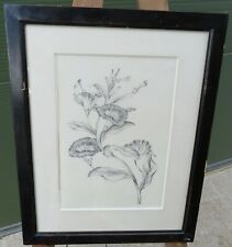 Antique Framed Pencil Drawing Picture of a Flower Botanical