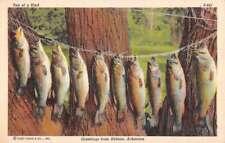 Helena Arkansas Fish Catch On Tree Antique Postcard K80588