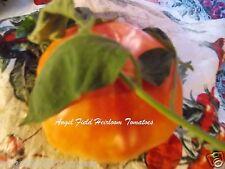 20 Lucky Cross Tomato  Garden Seeds  Organic Historical Garden  Vegetable Seeds