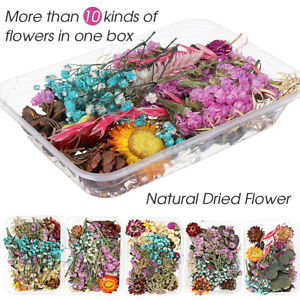 Real Dried Flower Dry Plants Craft DIY Aromatherapy Candle Epoxy Resin Pendan