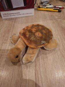 Schöne kleine Steiff Schildkröte