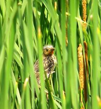 Bird Lovers Digital Print Are You My Mother Bird Cattails Wall Photo / Florals