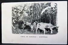 Oxcart Hauling Fruit at Banana Plantation, 1905 Posted HONDURAS PC