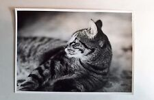 1950s B/W Photograph. Tabby Cat in Profile. Stylised/ Abstract. British Home Pet