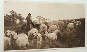 ANTIQUE PRINT 1901 RETURNING TO THE FOLD BY H W B DAVIS PAINTING FLOCK OF SHEEP