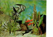"3D Aquarium Scene Card 4"" x 5"" Printed in USA"