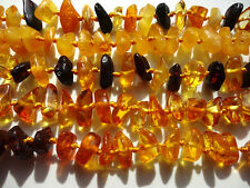 LOT- 5 pcs POLISHED  BALTIC AMBER BABY  NECKLACES -11inches