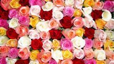 300pcs  Multi-Colors Rose Peony Flower Seeds Home Garden Plants