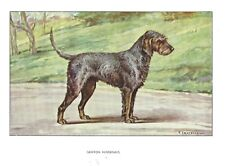 1930s Castellan France Dog Art Watercolor Print Griffon Nivernais Otterhound