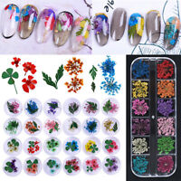 Dry Dried Flower 3D Decoration Nail Art Stickers Real for UV Gel Acrylic