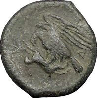 AKRAGAS in SICILY 338BC Zeus Rabbit Hare Authentic Ancient Greek Coin i49197