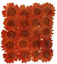 pressed flowers 20 pieces, dark orange margarite daisy art craft card making