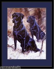 English Picture Print Black Labrador Retriever Dog Dogs Poster Art