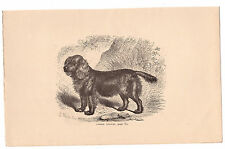 COCKER SPANIEL . GRAVURE OU TYPO ANCIENNE, SIGNEE, 1883. REF 4247